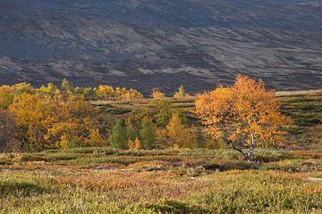 Berkenbomen in herfstkleuren van Barbara Brolsma