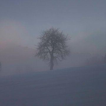 Boom winter von Lorance Jonkers