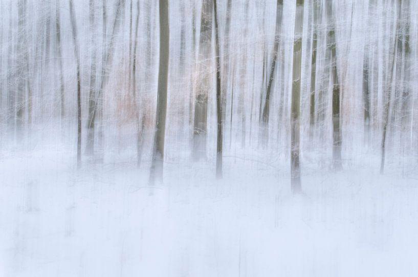 Winter forest van Christl Deckx