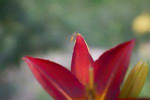 Vlieg op bloem van