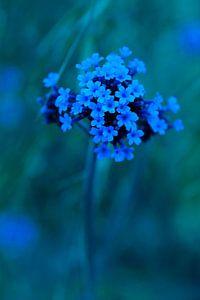 little blue smiles van geen poeha