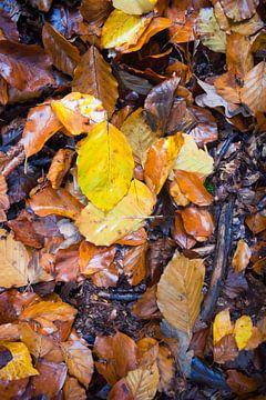 Herbstlaub im Wald von Fotografiecor .nl