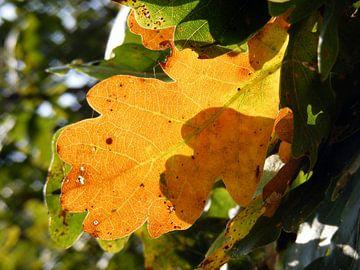 Herfstblad. Autumn leaf. van Joke Schippers