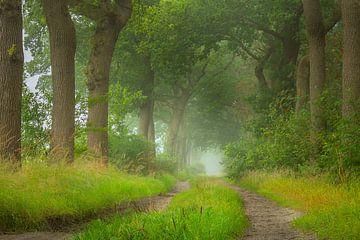 Doldersummerveld boslaantje van Mark van der Walle