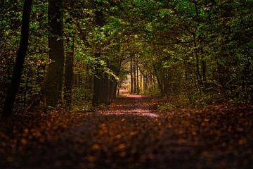 Forest 01 van Aron Nijs