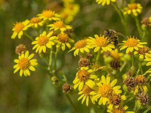 Bij omhelst bloem van Hannon Queiroz