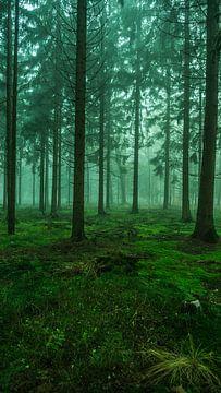 Grünes Moos von Kenji Elzerman