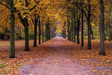 Herbstweg von Frank Herrmann