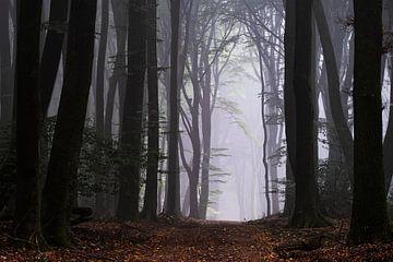 Bienvenue dans la forêt sur Tvurk Photography
