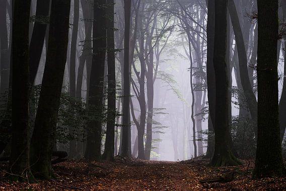 Welkom in de bos wereld van Tvurk Photography