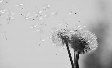 Paardenbloem, het afscheid van de bloem van Ingrid van Heeswijk