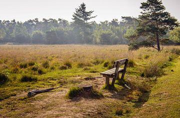 Houten bank in natuurgebied van Ruud Morijn