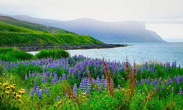 Zicht op de baai met lupine op de voorgrond, IJsland van Rietje Bulthuis