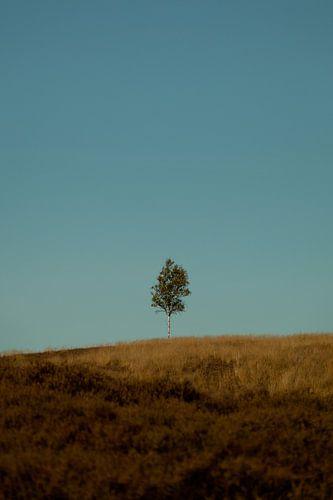 Eenzaam uitzicht van