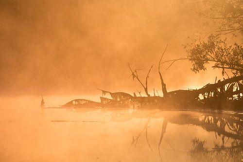 Mist en zon in de Brabantse Biesbosch