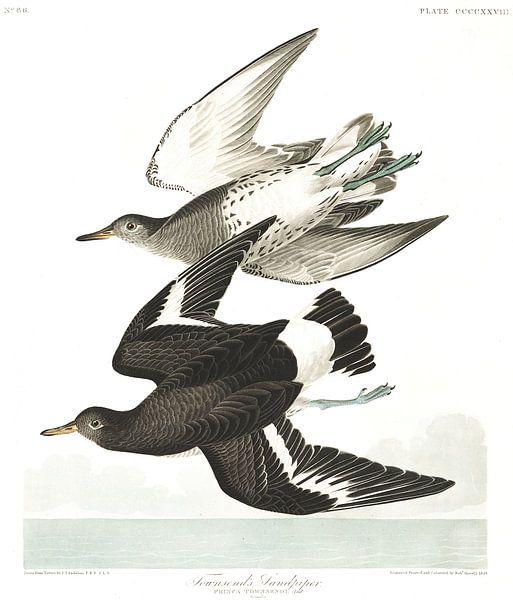 Brandingloper van Birds of America