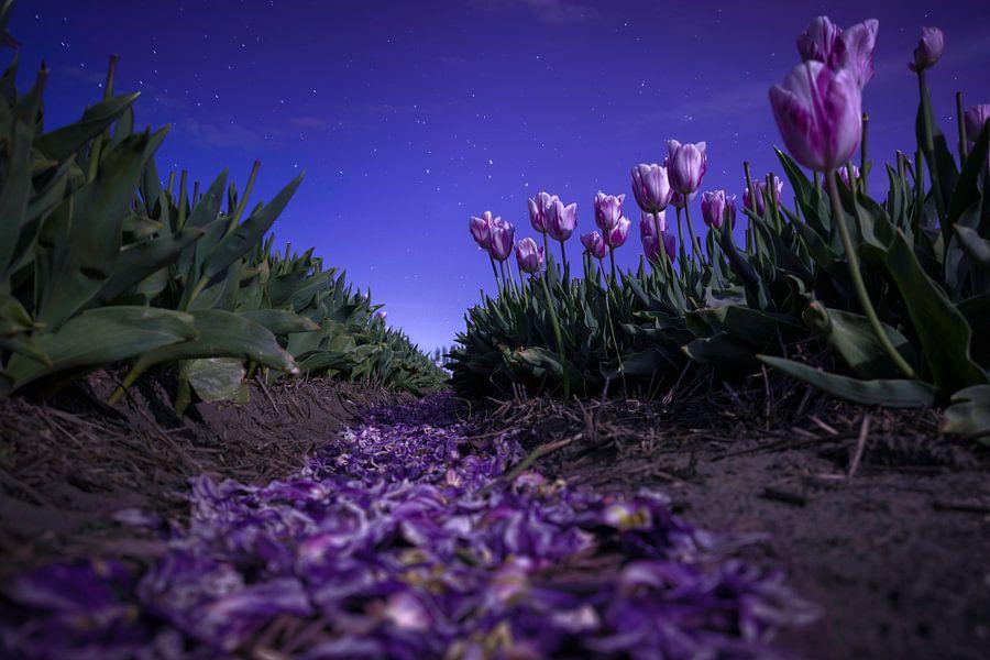 Moonlight Sonata van Martijn van der Nat