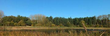 Waldspaziergang von RD Foto's