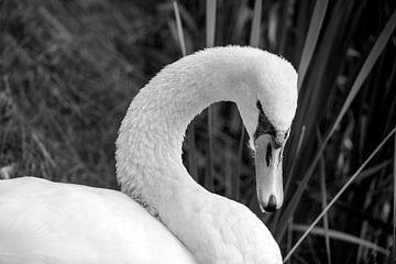 Zwaan in zwart-wit von Petra De Wit