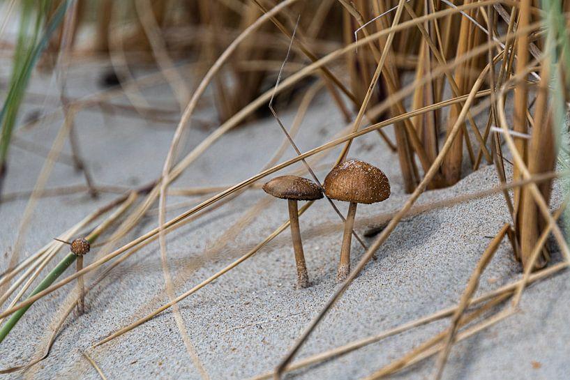 Duinpaddenstoelen (2) van Ingrid Aanen