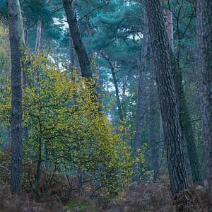 Farbe im Wald von Geert Brosens