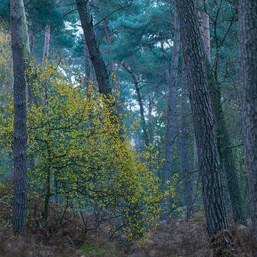 Kleur in het bos van Geert Brosens