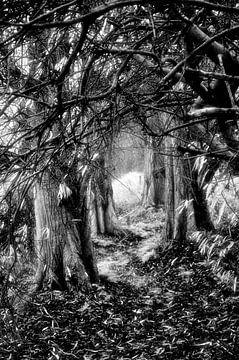 bomen von Wim de Vos