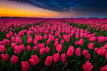 Goede morgen kleurrijk tulpenveld von Jenco van Zalk