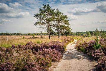 Kalmthoutse Heide van Bruno Hermans
