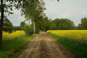 Ehringveld entouré de colza sur Jan Nuboer