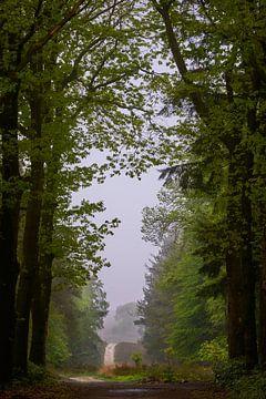 Waldweg an einem nieseligen Morgen von Jenco van Zalk