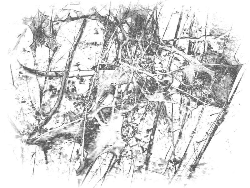 Caterpillar 1 van Jon Houkes