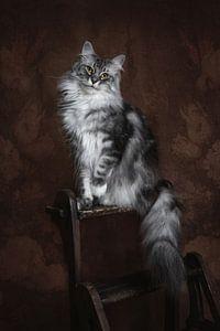 Vintage Fine Art Portrait Maine Coon Katze