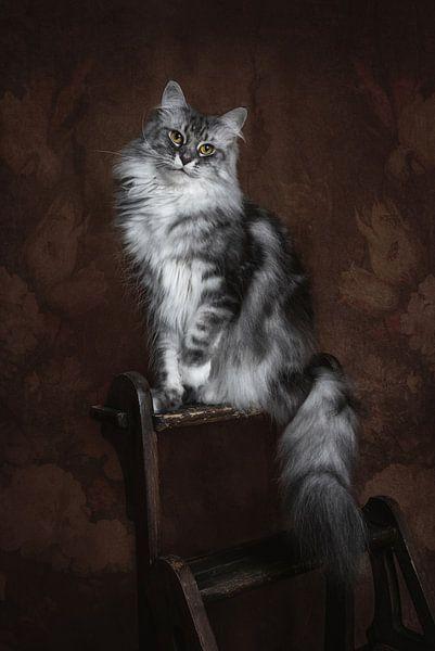 Vintage Fine Art Portrait Maine Coon Katze von Nikki IJsendoorn