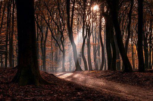 Mistige ochtend in mystiek herfstbos met zonnestralen