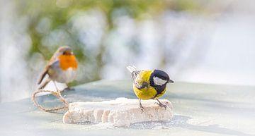 Robin sorgt dafür, wie Coalmouse isst von Rietje Bulthuis