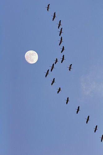 Flight of the cranes von Corinne Welp