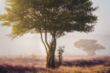 Nederlandse Bonsai van Joris Pannemans - Loris Photography