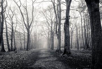 Verlaten bos in de mist (zwart-wit) van Fotografie Jeronimo