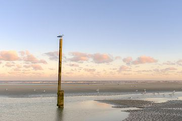 Möwen am Strand von Johan Vanbockryck