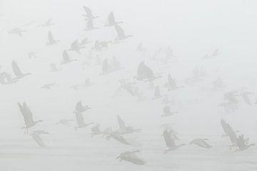 Kolganzen in de dikke mist van Art Wittingen