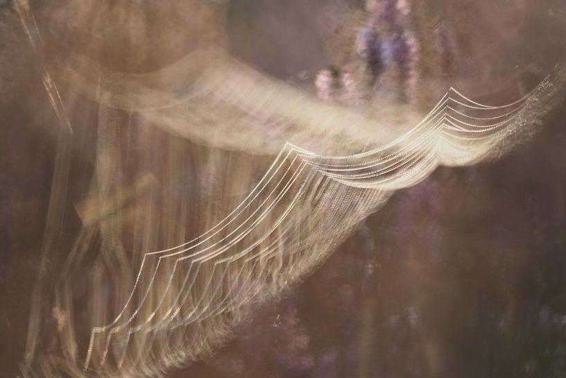 Spinnennetz bei Sonnenaufgang von Astrid Brouwers