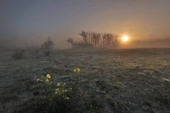 Zonsopkomst in de Schoorlse duinen van John Leeninga
