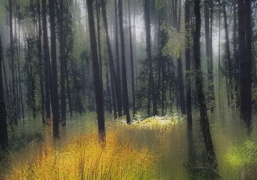 boslandschap van