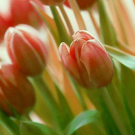 TulpenTijd van Yvonne Blokland