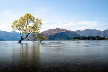 Wanaka tree Nieuw Zeeland van Jelmer Laernoes