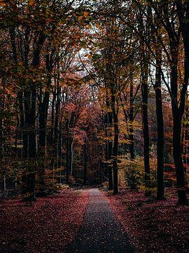 Herbstpfad im Speulderbos von Roos Maryne - Natuur fotografie