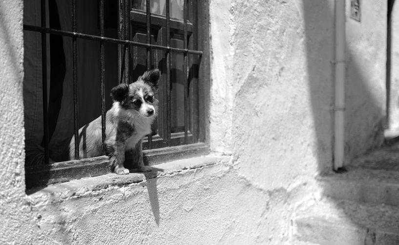 Hond in Malaga Zuid Spanje van Rob van Dam