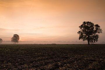 Herfstdag met zonsopkomst en ochtendmist von Saskia Smulders