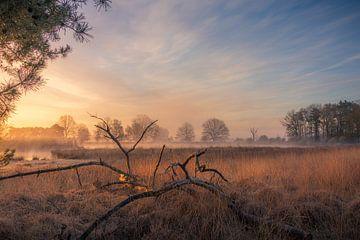 "Paysage ""Wild on the Dwingelderveld"" (Sauvage sur le Dwingelderveld) sur Coen Weesjes"